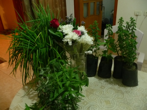 Flowers and plants for mother in Gaza.