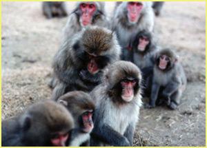 hundredth_monkey