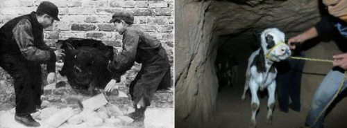 occupiedpalestine.wordpress.com588 × 218Search by image On the Left: Warsaw WWII On the Right: Gaza