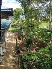 Bario guesthouse garden 3