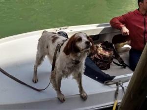 Dog in Murano 2