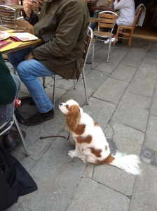 Dog waiting for lunch