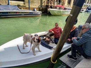 Dog in Murano